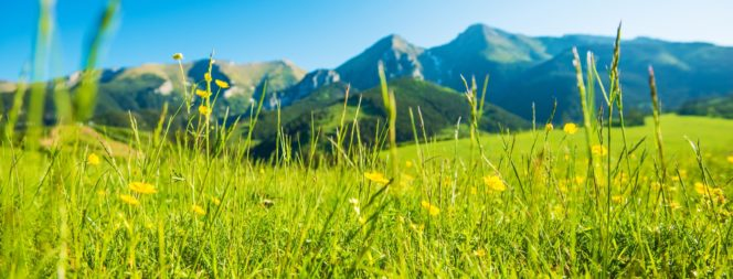 Mountains Summer Meadow